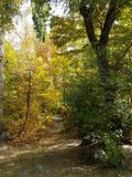 Autumn in the mountain forest. Stock Photo