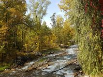 Autumn in the mountain forest. Stock Images