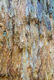 Colored Paper Bark Abstract Stock Images