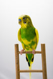 Colored parrot sitting at the branch Stock Photo