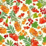 Colored pattern of orange berries and green leaves. Vector illustration. Royalty Free Stock Photography