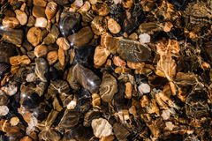 Colored pebbles under water at the coast Stock Photos