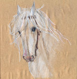 Colored pencil drawing of a white horse.Beautiful eyes. Royalty Free Stock Images