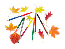 Colored pencils and a few autumn leaves Royalty Free Stock Photo