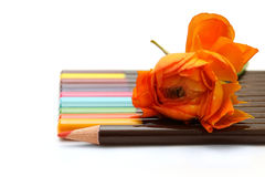 Colored pencils and orange flower. Colored pencils and a bright orange flower isolated on white background Stock Images