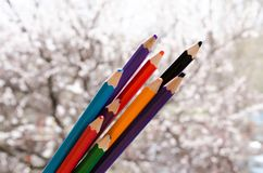 Colored pencils with painted stripes next. Colors of nature. Crayons with flowering apricots on the background. Nature creates. Colors of nature. Crayons with royalty free stock photo