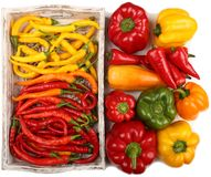 Colored peppers Stock Photography