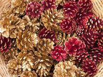 Colored pine cones. Christmas decoration (golden and red colored pine cones royalty free stock photos