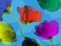 Colored poppies background Stock Images