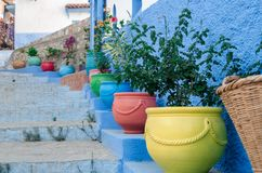 Colored pots of plants royalty free stock photography