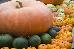 Colored Pumpkins Stock Image