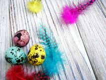 Colored colored quail eggs, with colorful feathers on white wooden background, happy Easter concept.  royalty free stock photography