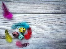Colored colored quail eggs, with colorful feathers on white wooden background, happy Easter concept.  stock photography