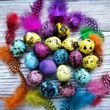Colored colored quail eggs, with colorful feathers on white wooden background, happy Easter concept.  stock photos