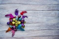 Colored colored quail eggs, with colorful feathers on white wooden background, happy Easter concept.  royalty free stock photo