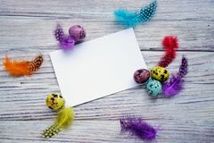 Colored colored quail eggs, with colorful feathers on white wooden background, happy Easter concept.  stock image
