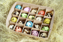 Eastern quail eggs in box Royalty Free Stock Photos