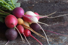 Colored radishes Stock Images