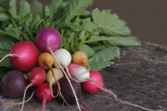 Colored radishes Stock Photo