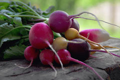 Colored radishes Stock Photography