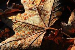 Colored Raindrops Stock Image
