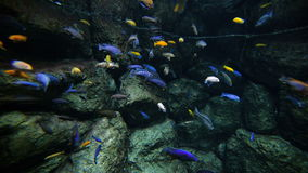 Colored reef fishes stock footage
