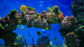 Colored reef fishes stock video