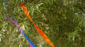 Colored ribbons tied to a tree, swaying in the wind.  stock footage
