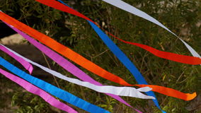 Colored ribbons tied to a tree, swaying in the wind.  stock video footage