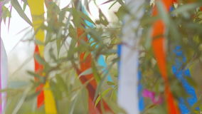 Colored ribbons tied to tree swaying in the wind. stock footage
