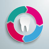 Colored Ring Cycle 4 Options Tooth Stock Image