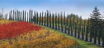 Colored road of cypresses Royalty Free Stock Photos