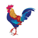 Colored rooster Stock Photography