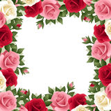 Colored roses frame. Stock Image