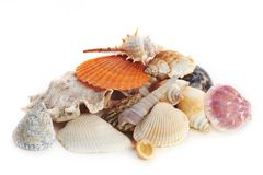 Colored sea cockleshells and starfish Royalty Free Stock Image