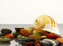Colored sea pebbles and seashell Royalty Free Stock Photo