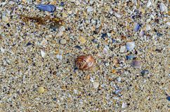 Colored sea shell standing in the golden beach sand near water, Stock Photos