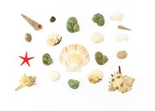 Colored sea shells and red star Stock Photo