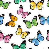 Colored seamless pattern butterfly Stock Photos