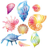 Colored seashell Stock Photo