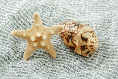 Colored Seashell (Starfish and Scallop) Royalty Free Stock Image