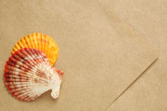 Colored seashells presented on sheet of textured paper Royalty Free Stock Photos