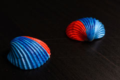 Colored shells Royalty Free Stock Image