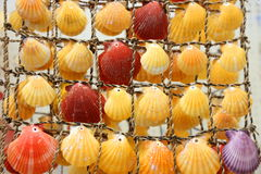 Colored shells Royalty Free Stock Photos