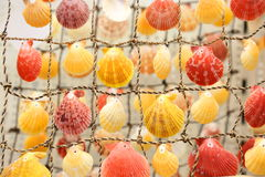 Colored shells Stock Photo
