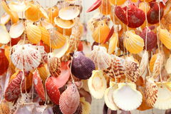 Colored shells Stock Photo