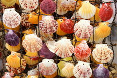 Colored shells Royalty Free Stock Photography