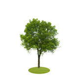 Colored Silhouette Tree Isolated on White Royalty Free Stock Photos