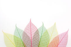 Colored skeleton leafs Royalty Free Stock Images