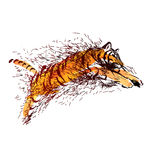 Colored sketch leaping tiger Stock Photography